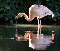 Khu sinh thái Flamingo